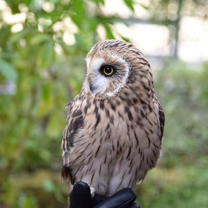 Tracking owls