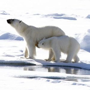Polar ice melting is unstoppable  how should we prepare
