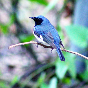 Bird small