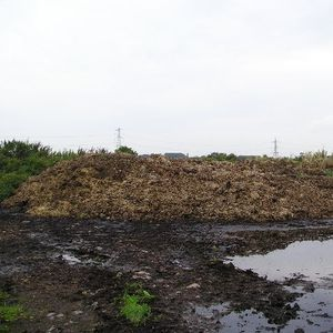 Animal manure causes water pollution