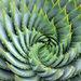 Fibonaccialo
