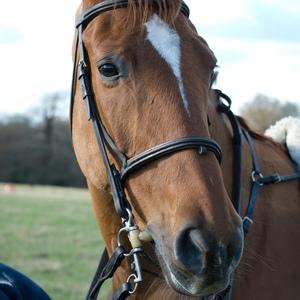 2.horse
