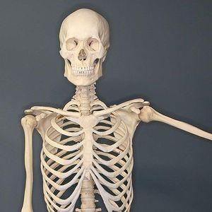 2. skeleton