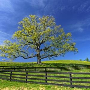 4. trees