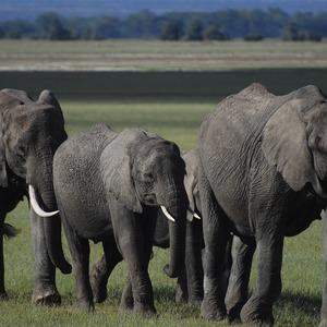 Elephants 4499210 1920