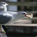 Seagulls %281%29