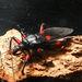 Mimicking a beetle